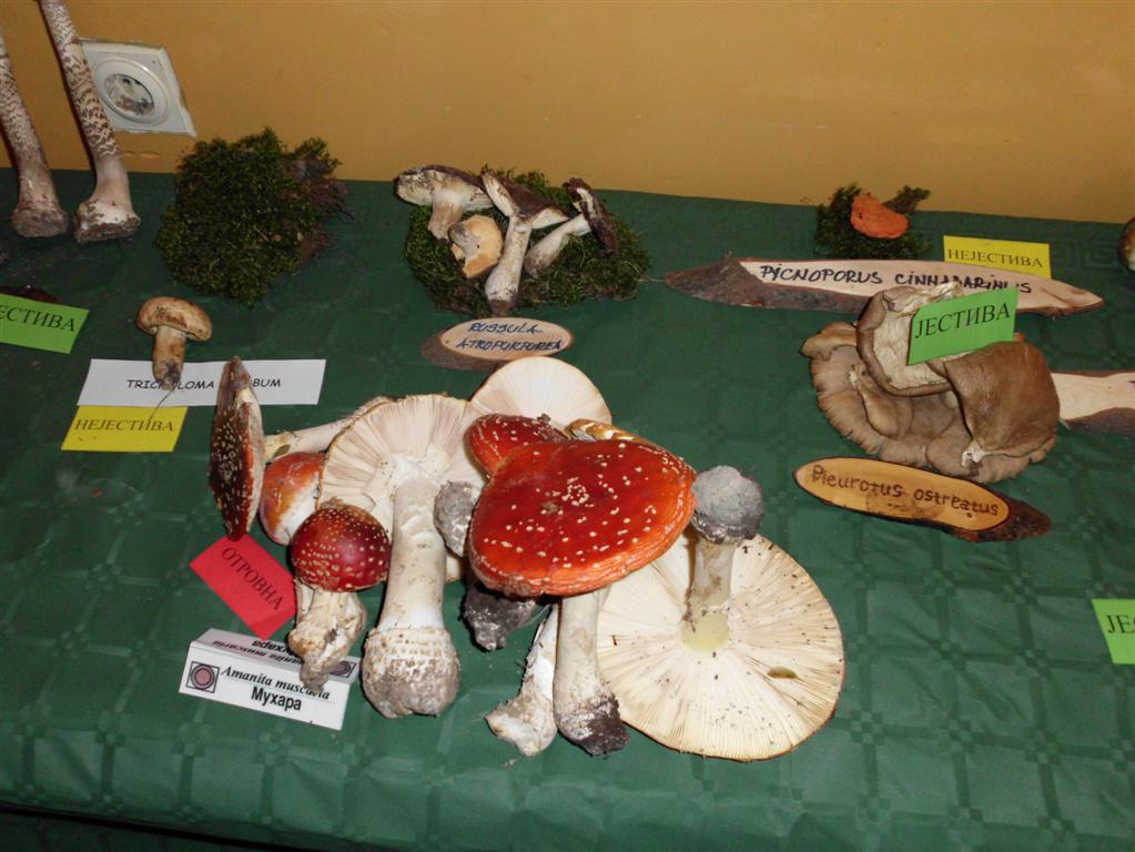 Dani bilja i gljiva 2